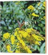 Graceful Butterfly Wood Print by Jose Lopez
