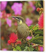 Graceful Honeyeater Wood Print