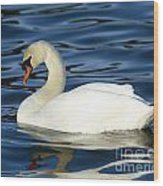 Graceful Reflections - Mute Swan Wood Print
