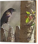 Grackle Wood Print