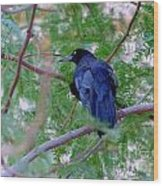 Grackle On A Branch Wood Print