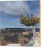 Grand Canyon Struggling Tree Wood Print