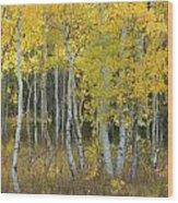 Grand Teton Aspens Wood Print