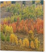 Grand Teton Fall Color Wood Print
