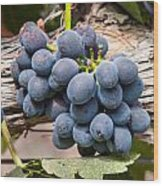 Grape Cluster Vine Wood Print
