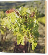 Grape Leaves Wood Print by Jeremy Woodhouse