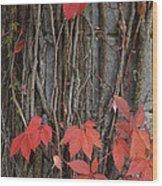 Grape Leaves On Column Wood Print