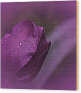 Grape Tulip Wood Print