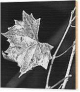 Grape Vine Wood Print
