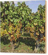 Grapes Growing On Vine Wood Print