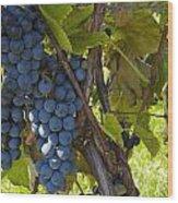 Grapes On A Vine Sutton Junction Quebec Wood Print