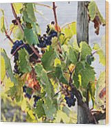 Grapes On Vine Wood Print by Jeremy Woodhouse