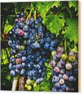 Grapes Ready For Harves Wood Print