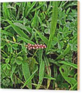 Grass Drops II Wood Print