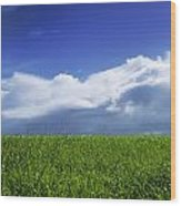 Grass In A Field, Ireland Wood Print
