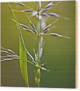 Grass In Flower Wood Print