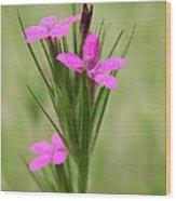 Grass Pink Bouquet Wood Print