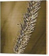Grass Seedhead Wood Print