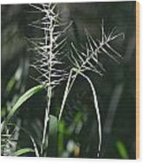 Grass Seeds In The Morning Light Wood Print