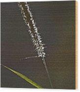 Grass Spikelet Wood Print by Heiko Koehrer-Wagner