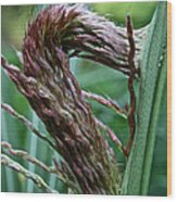 Grass Worm Wood Print