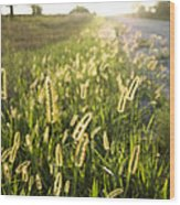 Grasses On A Nebraska Farm Wood Print