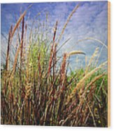Grasses Standing Tall Wood Print