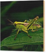 Grasshopper 1 Wood Print