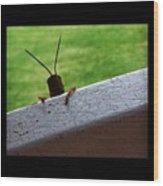 Grasshopper Wood Print by Dana Coplin