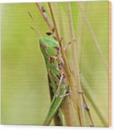 Grasshopper In Green Wood Print
