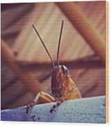 Grasshopper On My Rocker Wood Print by Dana Coplin