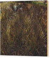 Grassland In Late Afternoon Wood Print