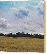 Grassy Country Fields Wood Print
