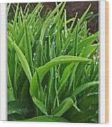 Grassy Drops Wood Print