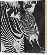 Gravy Zebra Wood Print