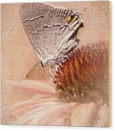 Gray Hairstreak Butterfly Wood Print