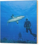 Gray Reef Shark With Divers, Papua New Wood Print by Steve Jones