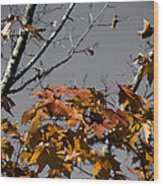 Gray Skys Wood Print