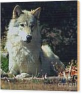 Gray Wolf ... Montana Art Photo Wood Print
