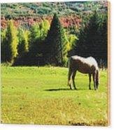 Grazing Autumn Wood Print