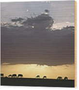 Grazing Cattle Silhouetted Wood Print