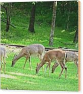 Grazing Doe Wood Print