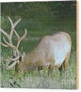 Grazing Elk Wood Print