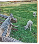 Grazing Farm Animals At Booker T. Washington National Monument Park Wood Print by James Woody