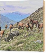 Grazing In The Foothills Wood Print