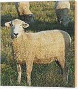 Grazing Sheep. Wood Print
