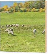 Grazing Sheep On Farm In Autumn Maine Wood Print