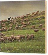 Grazing Sheep Wood Print