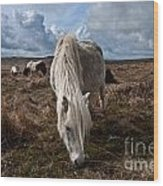 Grazing The Moor Wood Print