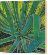Great Agave Wood Print
